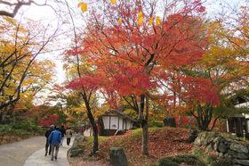 松茸山10.jpg